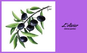 L'olivier, témoin fidèle des promesses divines (2)