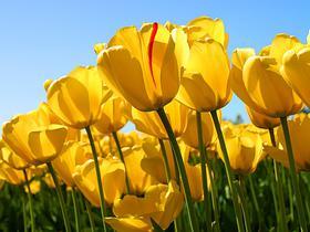 Worte wie wärmende Frühjahrssonne