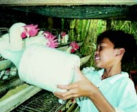 The Dagatan family farm school is located in the province of Batangas.