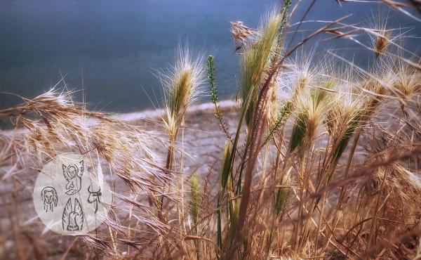 Au fil de l'Évangile de mardi : découvrir l'ivraie dans le monde et dans nos cœurs