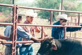 Sekolah Keluarga Petani 'El Peñon'