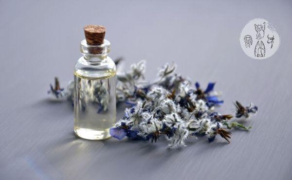 Au fil de l'Évangile de lundi saint : le parfum du cœur