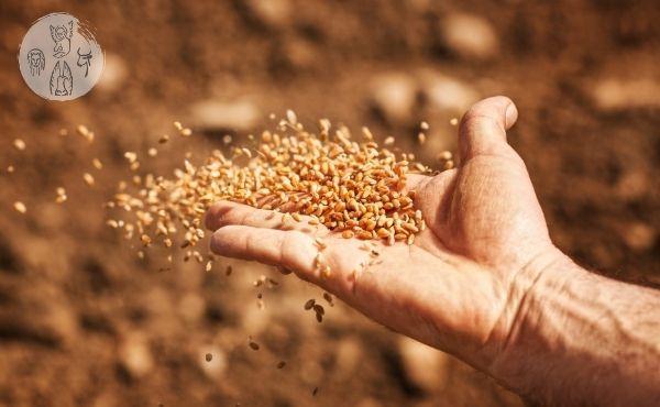 Commento al Vangelo: Il seminatore