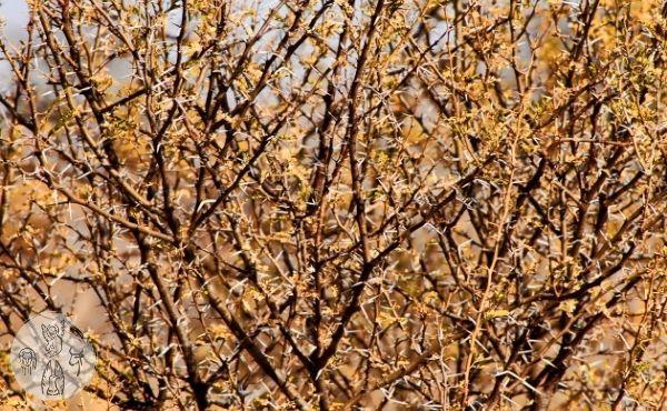 Evangelio del miércoles: atrapado entre las zarzas