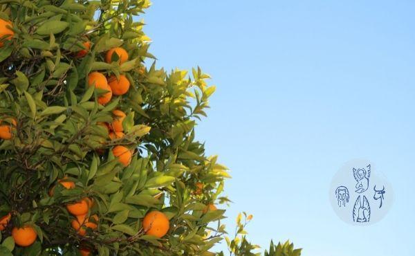Au fil de l'Évangile de mercredi : On reconnaît un maître à ses fruits