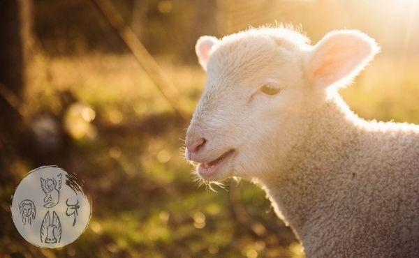 "Commentary on the Gospel: ""Behold, the Lamb of God"""