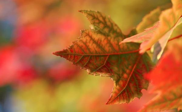 Wrzesień