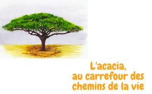 L'acacia au carrefour des chemins de la vie