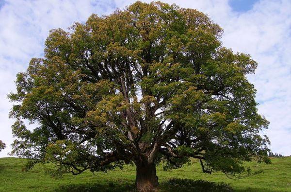 Commentary on the Gospel: Zacchaeus