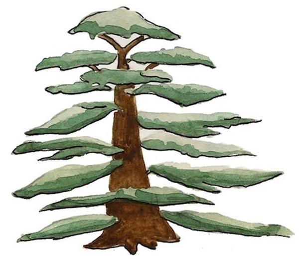 Les arbres de la Bible