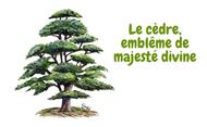 Le cèdre, emblème de majesté divine