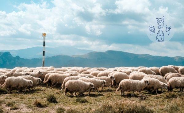 Evangelio del lunes: la puerta de las ovejas