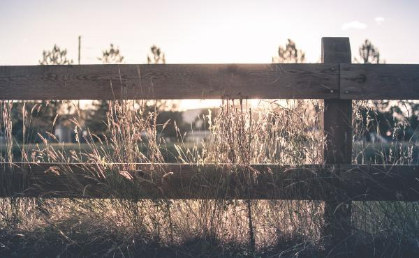 Commentaire d'Évangile : La porte des brebis