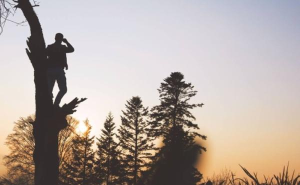 Evangelio del martes: bajó rápido y lo recibió con alegría