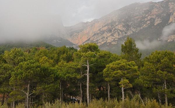 El Pas dels Pirineus (II)