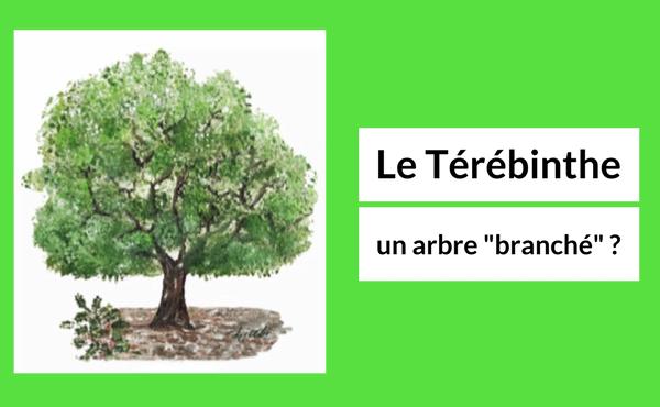 Le térébinthe, un arbre «branché» ?