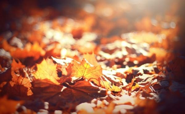 2 novembre : tous les fidèles défunts