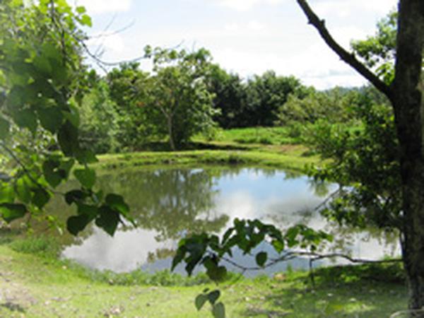 Die Umwelt ist ein Spiegel der Schöpferliebe Gottes
