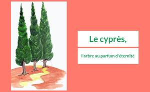 Le cyprès, l'arbre au parfum d'éternité