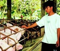 En el curso 2003-2004 se espera ampliar la granja de ganado porcino.