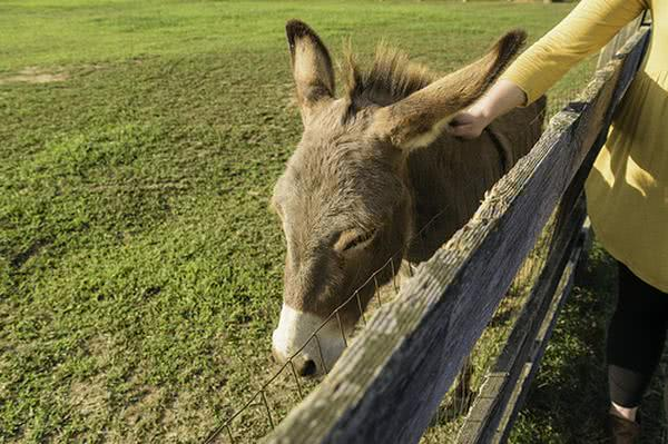 Colinda Little Donkey