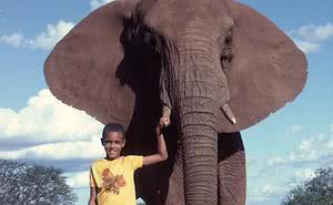 El hombre que caminaba con los elefantes (próximamente, sacerdote)