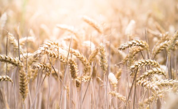 Commentary on the Gospel (with audio version): The Bread from Heaven