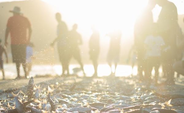 Evangelio del jueves: Dejadas todas las cosas, le siguieron