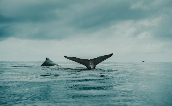 Evangelio de lunes: No se le dará otra señal que la de Jonás