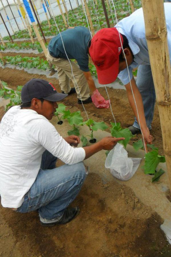 Escuela Agrícola Utz Samaj