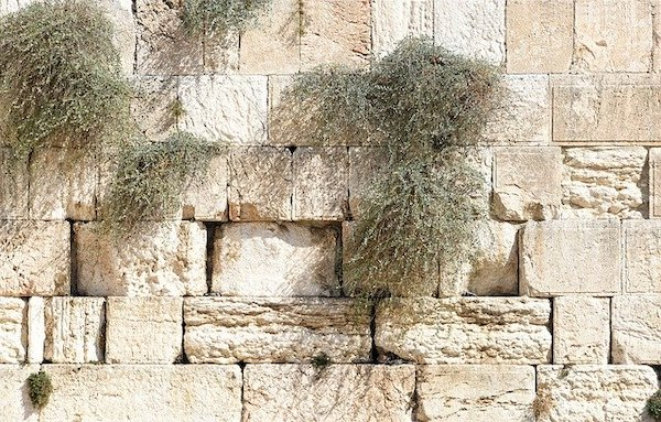 Opus Dei -  Jeesus päätetään surmata (Joh. 11:45-57)
