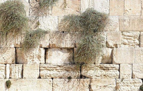 Jeesus päätetään surmata (Joh. 11:45-57)