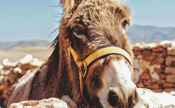 """Opus Dei - Saint Josemaria's """"Theology of the Donkey"""""""