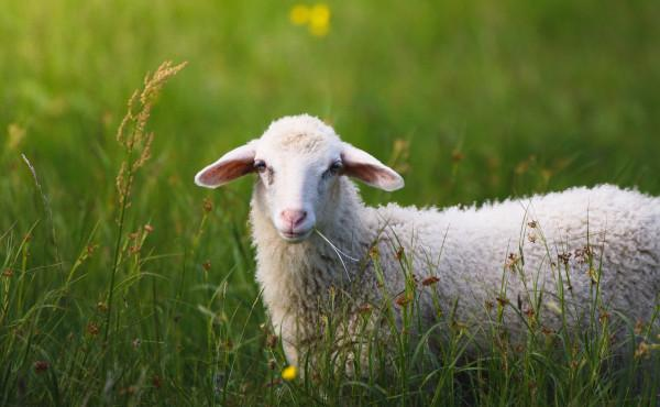 Commentary on the Gospel: The Lamb of God