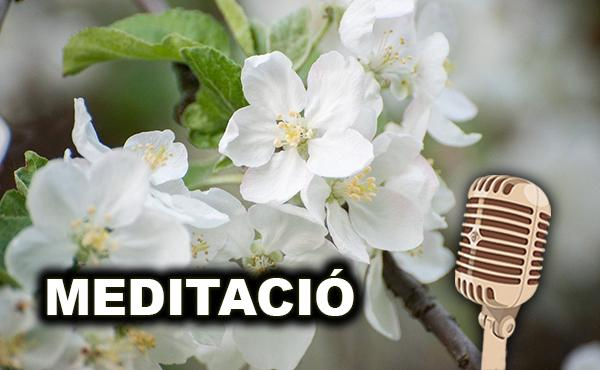 Meditació del vicari de Catalunya. Mes de maig