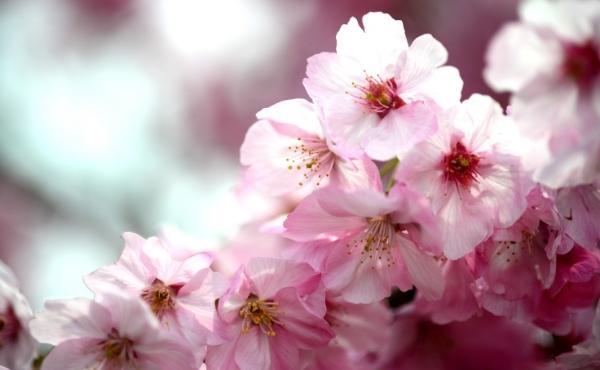 Meditazioni: giovedì della 5ª settimana di Pasqua