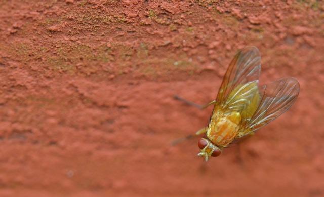 "Opus Dei - Un puñado de ""ideas mosca"""