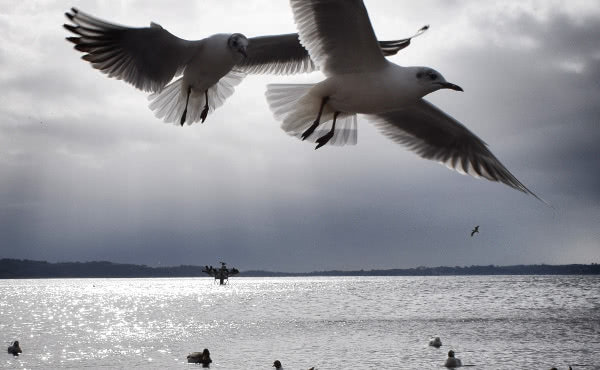 Opus Dei - Nova Sredozemlja (IV): Nemoj pričati – slušaj ga