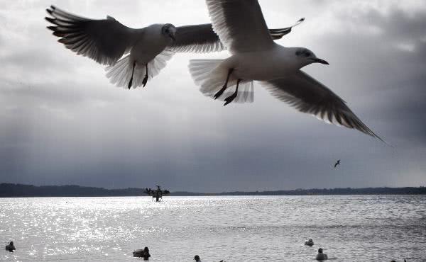 Nova Sredozemlja (IV): Nemoj pričati – slušaj ga