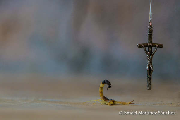 """Muerte ¿donde tu victoria?"". Escorpión frente a crucifijo (Kenia)."