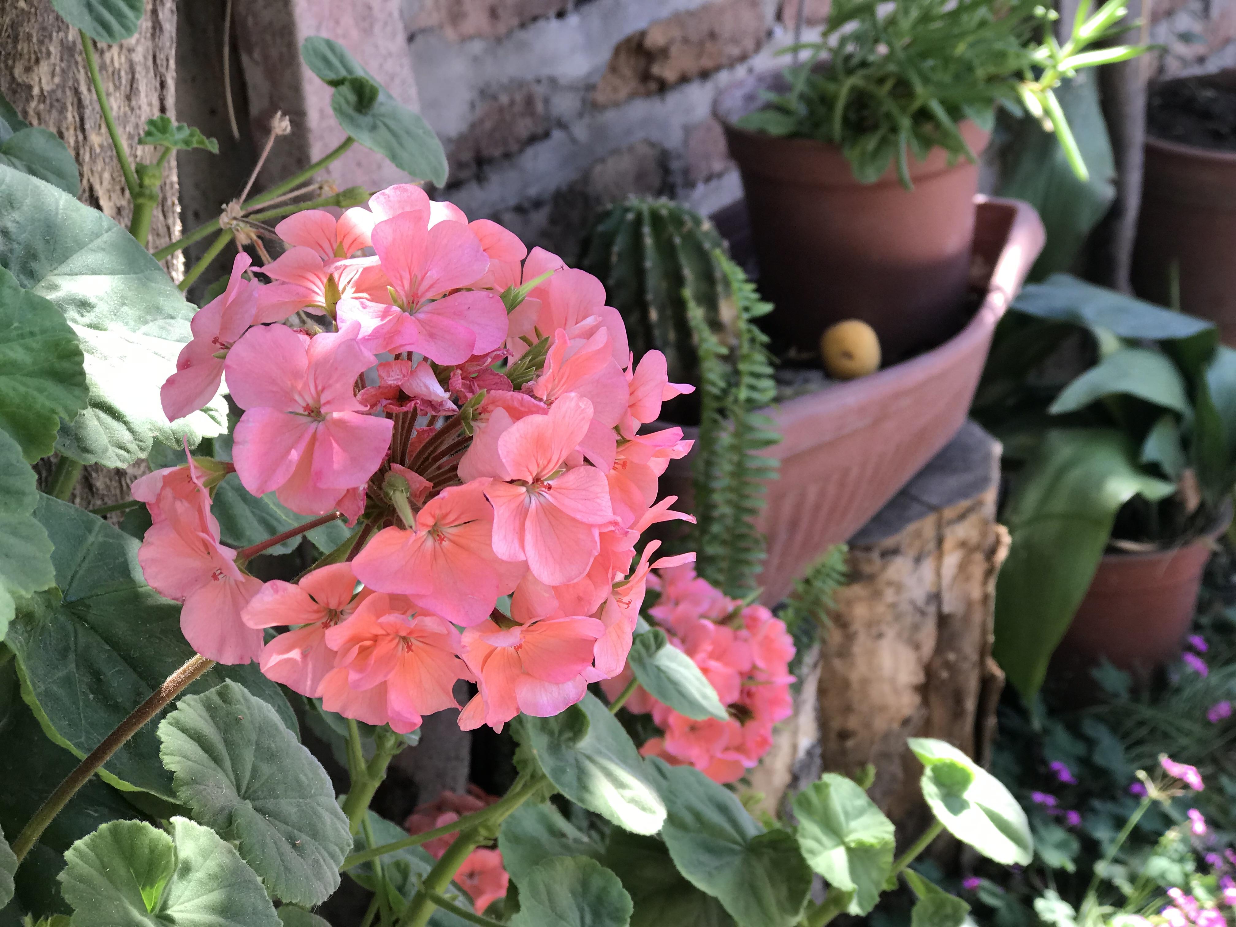 Detalle de macetas de cardenales, helechos y cactus ubicados a las afueras de la sede.