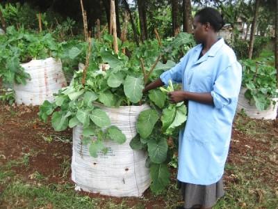 Mary Njeri Kingori enseña Agricultura en Kimlea
