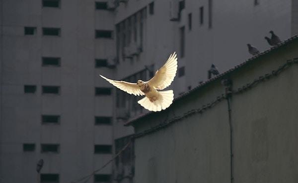Opus Dei - Prepararsi alla Pentecoste