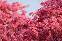 Lapachos rosados de Fernando de la Mora