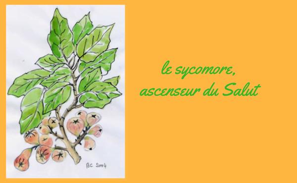 Opus Dei - Le sycomore, ascenseur du Salut