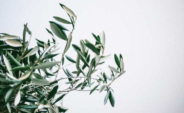 Comentario al Evangelio: Domingo de Ramos