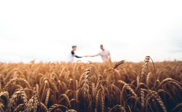 Évangile du dimanche : Les ouvriers de la vigne