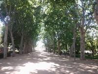 Els Camps Elisis és un dels llocs de Lleida que sant Josepmaria recordaria tota la vida.