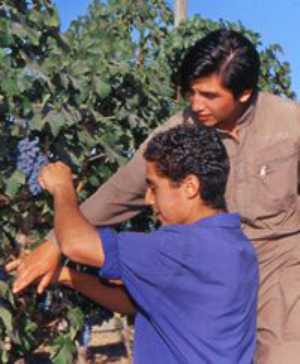 Escuela Agrícola Las Garzas, en Chile